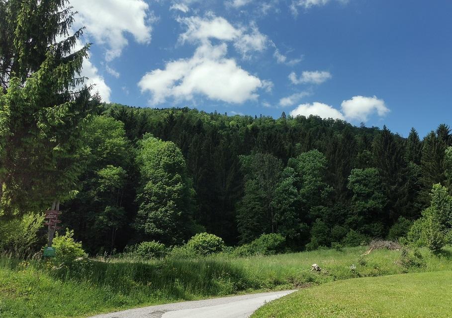 Smrekomaz-kocevski-gozd-3